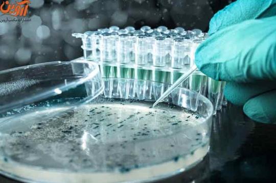 رتبه قبولی رشته میکروبیولوژی